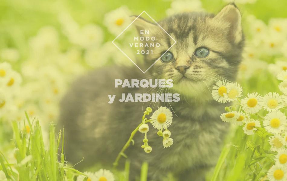 Lunes 9 de agosto: Día internacional del gato.